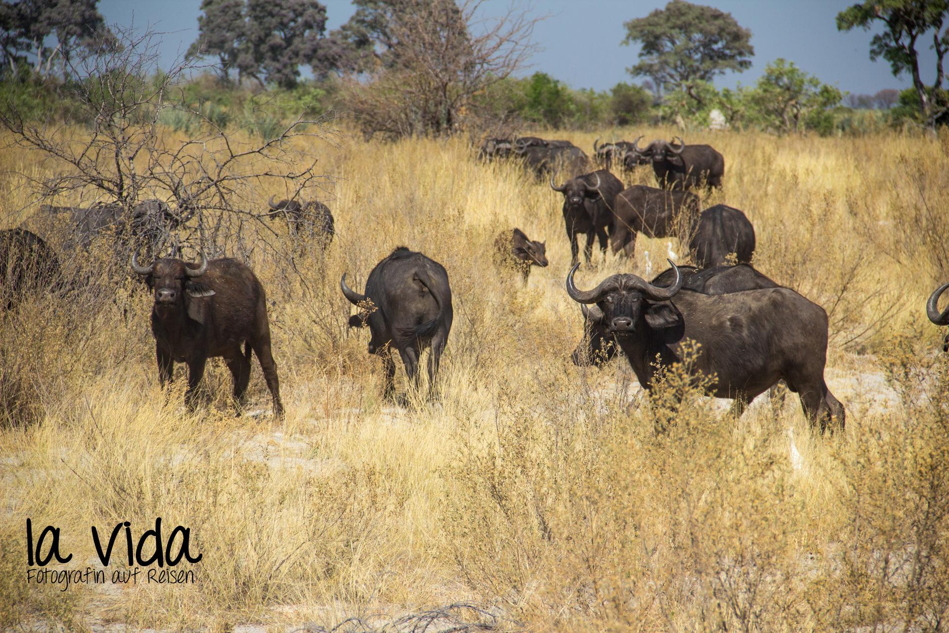 Botswana-Sambia07