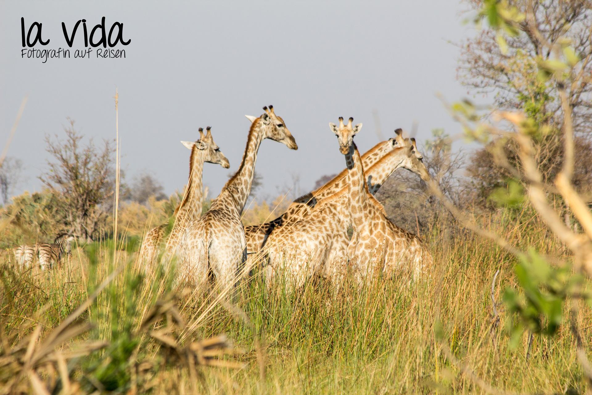 Botswana-Sambia18