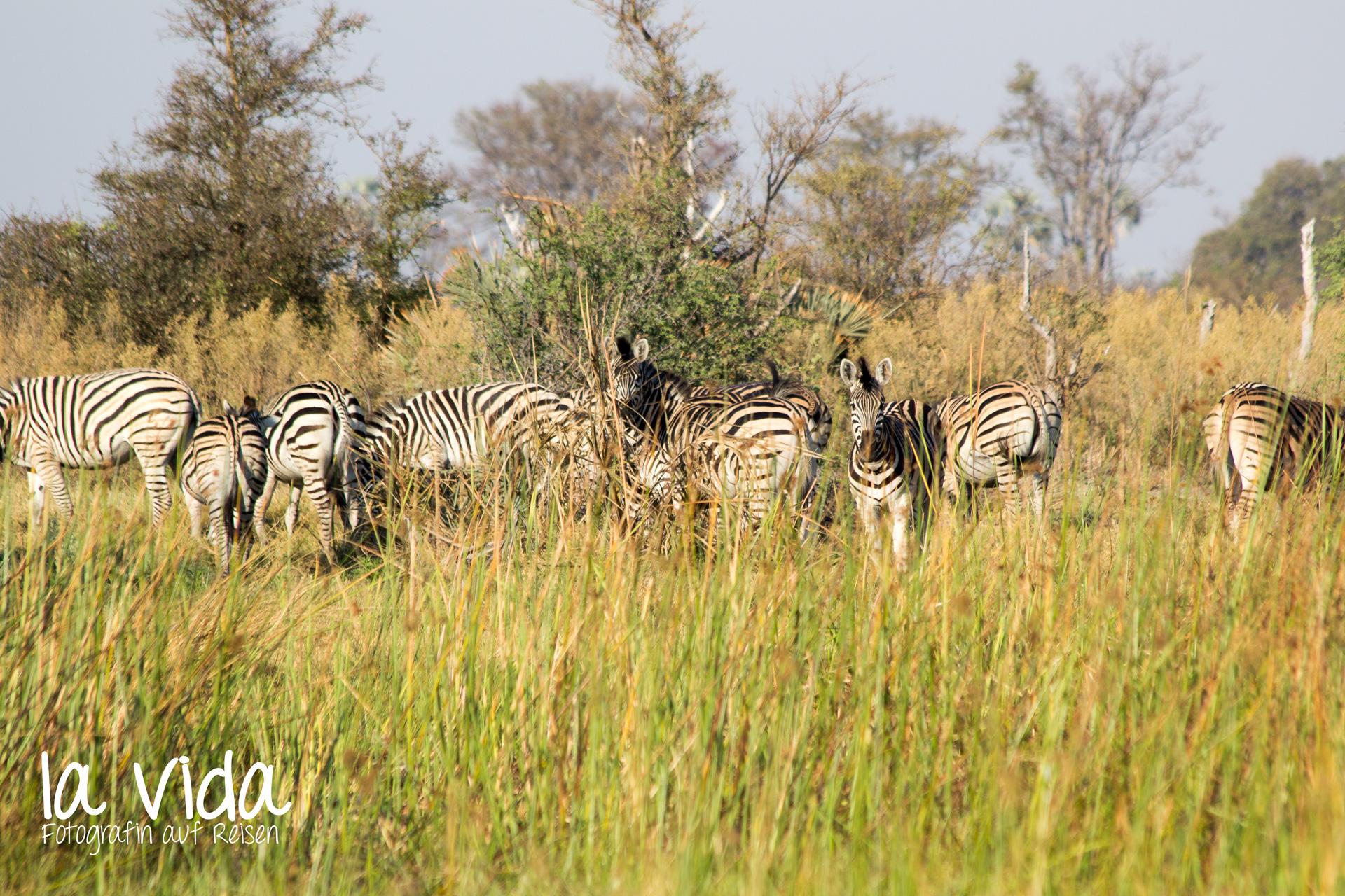 Botswana-Sambia19