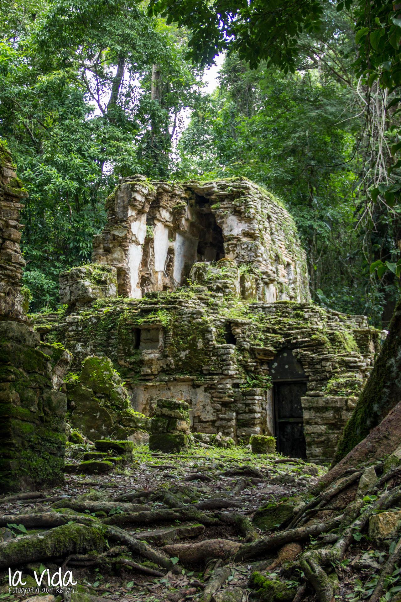 Gewachsen_Ruinen_Yaxchilan