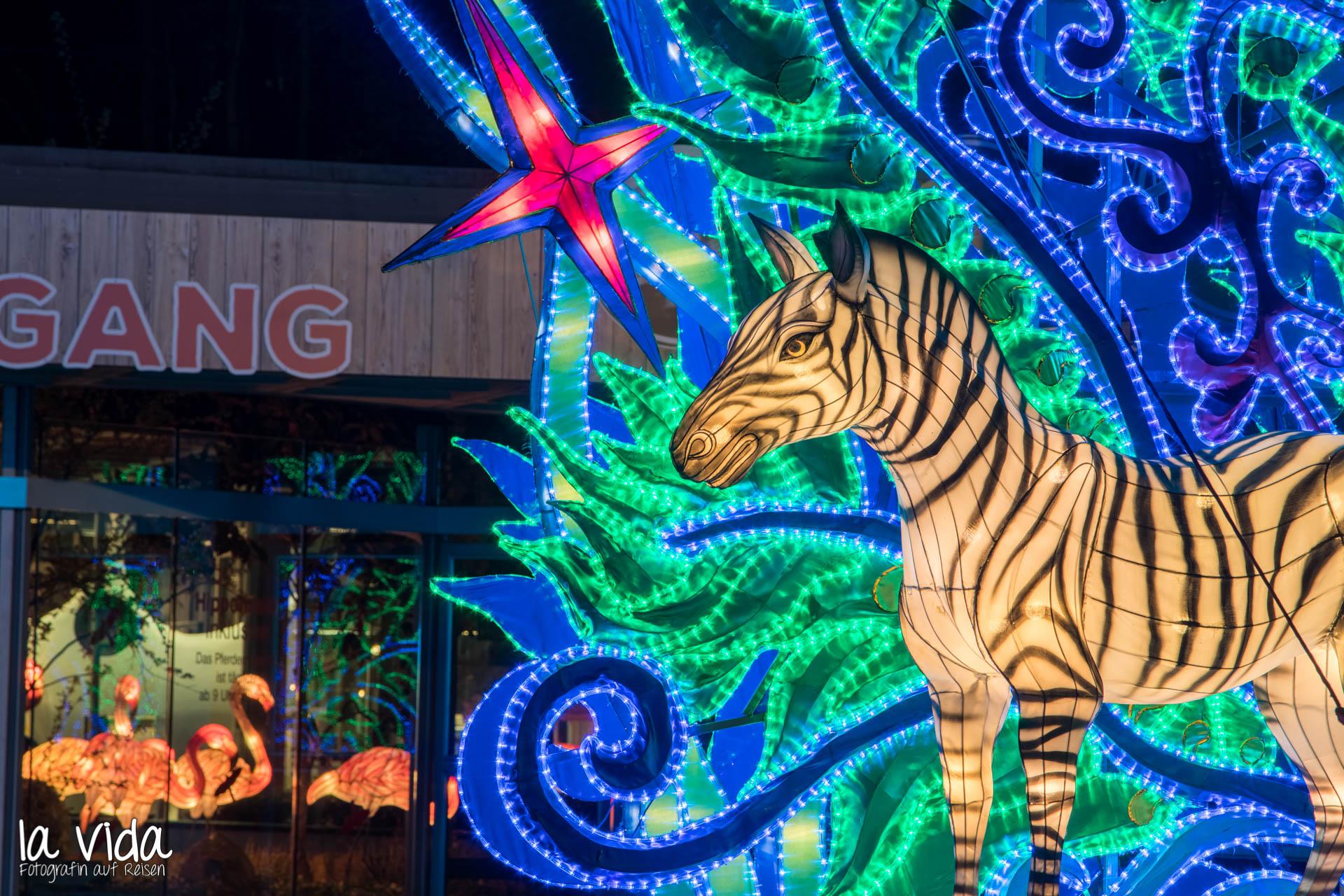 Zoo Köln Lichter