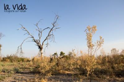 Botswana-Sambia10
