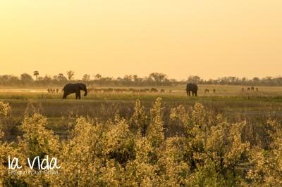 Botswana-Sambia13