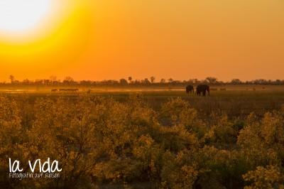 Botswana-Sambia16