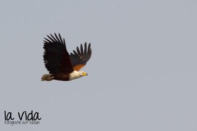 Botswana-Sambia29