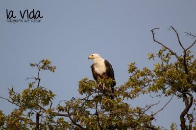 Botswana-Sambia32