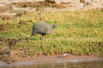 Botswana-Sambia33