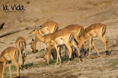 Botswana-Sambia34