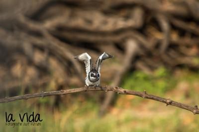 Botswana-Sambia35