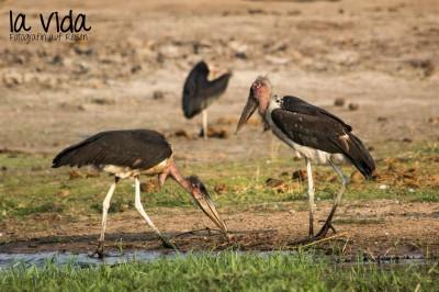 Botswana-Sambia37