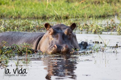 Botswana-Sambia38