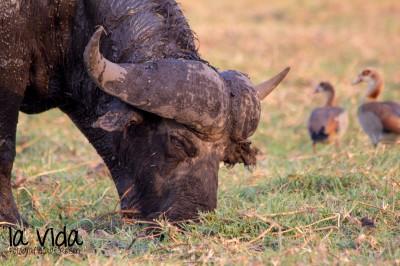 Botswana-Sambia41