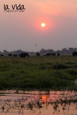 Botswana-Sambia44