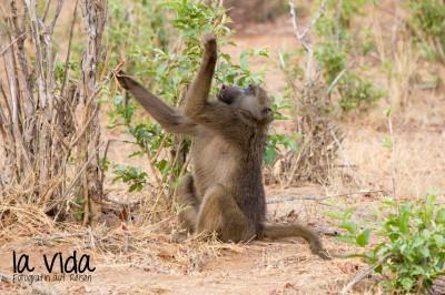 Botswana-Sambia46