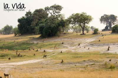 Botswana-Sambia47