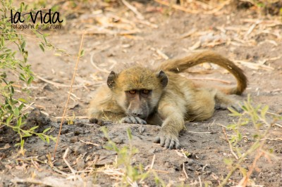 Botswana-Sambia49