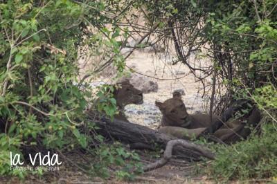 Botswana-Sambia51