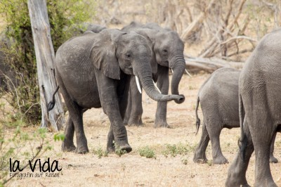 Botswana-Sambia54