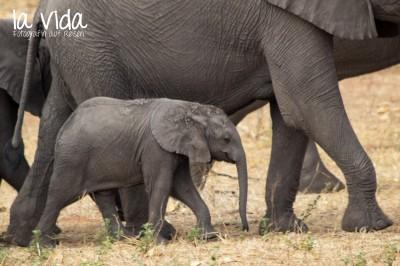 Botswana-Sambia55