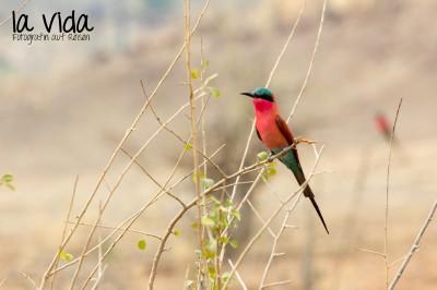 Botswana-Sambia59