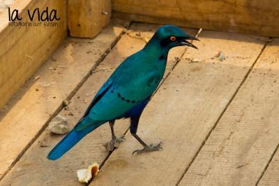 Botswana-Sambia60