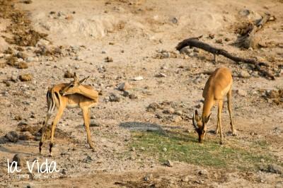 Botswana-Sambia64
