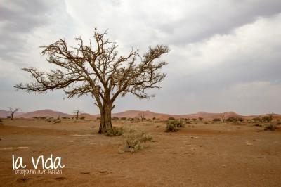 Namibia027