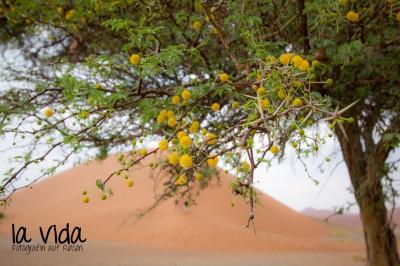 Namibia030