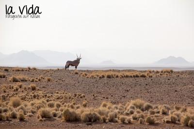 Namibia039