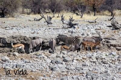 Namibia047