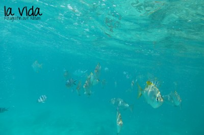 Seychellen15