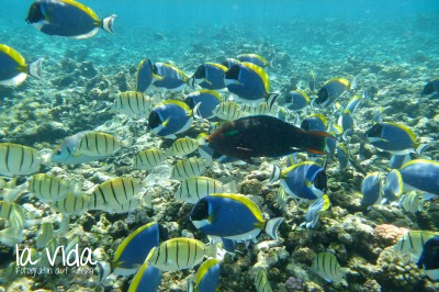 Seychellen30
