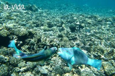 Seychellen32