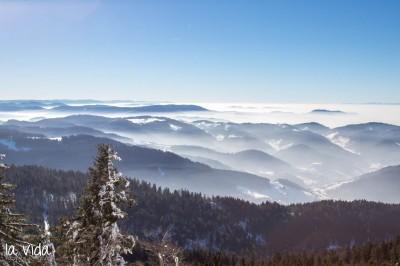 Schwarzwald-007