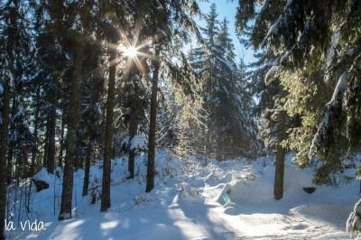 Schwarzwald-022