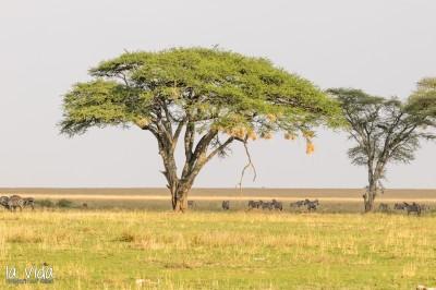 Tansania-049