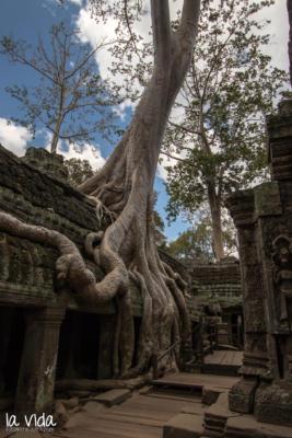 Kambodscha-016