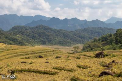 Vietnam-030