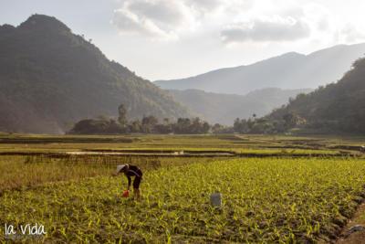 Vietnam-050